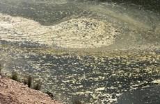 Cá tiếp tục chết hàng loạt trong đợt nắng nóng tại Australia