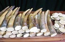 Thu giữ gần 1,4 tấn vảy tê tê và hơn 100kg ngà voi chuyển từ châu Phi