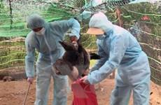 Phê duyệt Kế hoạch quốc gia phòng, chống bệnh cúm gia cầm