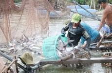 Mở thị trường xuất khẩu thủy sản: Nhiều dư địa tăng trưởng
