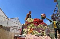 Lâm Đồng: Những triệu phú hoa hồng dưới chân núi Langbiang