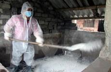 Quảng Ninh: Khẩn trương dập ổ dịch tả lợn đầu tiên ở Đông Triều