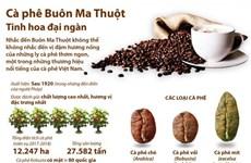 [Infographics] Càphê Buôn Ma Thuột - Tinh hoa đại ngàn