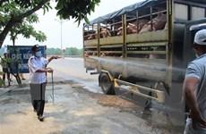 Thành lập Ban Chỉ đạo quốc gia phòng, chống dịch tả lợn châu Phi