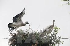 Chim quý nằm trong sách Đỏ xuất hiện ở Vườn chim Bạc Liêu