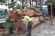Đắk Nông: Khởi tố nhóm đối tượng khai thác gỗ trong rừng phòng hộ