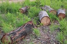 Cục Kiểm lâm chỉ đạo làm rõ vụ phá rừng chiếm đất dọc Quốc lộ 29