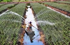 Đầu tư vào nông nghiệp công nghệ cao: Khó tiếp cận nguồn lực