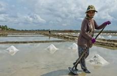 Campuchia có thể thiếu muối trong năm nay do sản lượng thấp