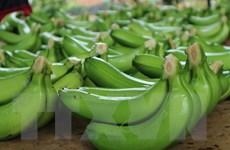 Thông tin về việc Nhật Bản tăng tần suất kiểm tra nông sản Việt