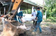 Phát hiện thêm 5 ổ dịch tả lợn châu Phi ở Bình Dương