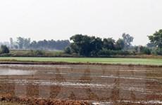 Hà Tĩnh: Một người bị sét đánh tử vong khi đang gieo mạ ngoài đồng