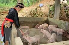 Việt Nam tích cực chủ động không để dịch tả lợn châu Phi lan rộng