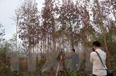 Bắt thêm một đối tượng trong vụ hạ độc hàng ngàn cây thông ở Lâm Đồng