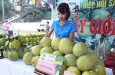 Phú Thọ phát triển nhãn hiệu sản phẩm nông nghiệp đặc trưng