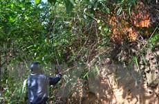 Đà Nẵng: Vụ cháy rừng ở huyện Hòa Vang đã được dập tắt