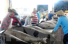 Ký kết EVFTA: Cơ hội lớn cho ngành thủy sản bứt phá