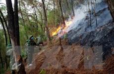 Nghệ An: Một người tử vong khi tham gia tiếp nước chữa cháy rừng