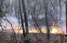 Dập tắt một vụ cháy rừng trồng nguyên liệu ở Quảng Nam
