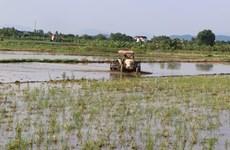 Nghệ An: 'Cơn mưa vàng' cứu nguy sản xuất nông nghiệp và cháy rừng