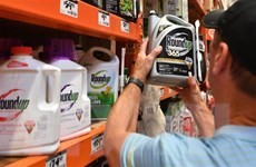 Sydney xem lại việc sử dụng thuốc diệt cỏ Roundup do lo ngại ung thư