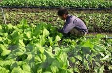 Nông dân Bà Rịa-Vũng Tàu thành công với nông nghiệp hữu cơ
