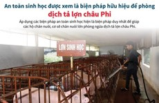 An toàn sinh học là biện pháp hữu hiệu để phòng dịch tả lợn châu Phi