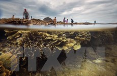 [Photo] Đến Hòn Yến của Phú Yên để ngắm san hô biển tuyệt đẹp