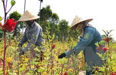 Việt Nam tăng 3 bậc trong báo cáo về phát triển bền vững