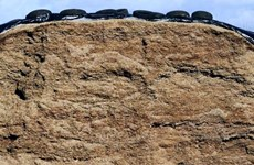 Pháp thu gom lốp xe ôtô cũ ở các đồng cỏ để bảo vệ bò