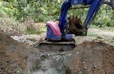 Dịch tả lợn châu phi đã lan ra toàn tỉnh Bình Phước