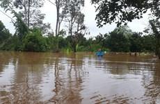 Đồng Nai: Mất trên 5.000 tấn cá do mưa lũ và thủy điện xả lũ
