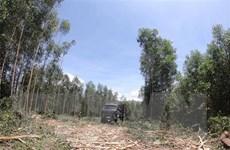 Đà Nẵng: Giao 'nhầm' rừng gỗ lớn cho người dân làm đất sản xuất