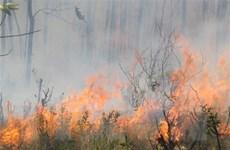 500 người tham gia khống chế đám cháy rừng tại thị xã Cửa Lò