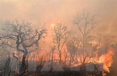 Tổng thống Brazil: Cháy rừng Amazon là 'vấn đề nội bộ' của khu vực