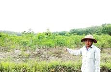 Điều tra vụ chặt phá rừng tại Khu rừng Văn hóa-Lịch sử Chàng Riệc