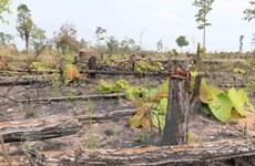 Gia Lai: Ban Quản lý rừng phòng hộ Ia Meur chi sai hơn 900 triệu đồng