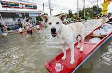 Mưa lũ diễn biến phức tạp tại Thái Lan, hàng chục nghìn người sơ tán