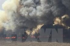 Cháy rừng thiêu đốt hàng triệu động vật hoang dã tại Bolivia