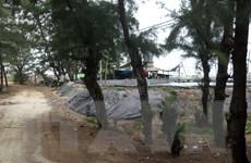 Quảng Ngãi: Rừng dương phòng hộ bị xâm chiếm để nuôi tôm