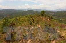 Cơ quan chức năng vào cuộc vụ phá rừng thông 20 năm tuổi tại Lâm Đồng