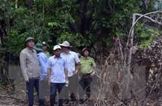 Phó Bí thư Thường trực Tỉnh ủy Phú Yên kiểm tra khu vực rừng Hòn Đác
