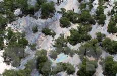 Sự cố dầu loang đe dọa rạn san hô lớn thứ hai thế giới tại Brazil
