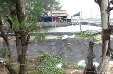 Phản hồi thông tin về đất rừng bị lấn chiếm để nuôi tôm tại Quảng Ngãi