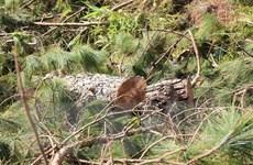 2.000m2 đất rừng trong Vườn Quốc gia Bidoup-Núi Bà bị cày xới