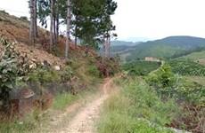 Lâm Đồng: Xử lý nghiêm chủ nhà hàng xây dựng trái phép trên đất rừng