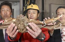 Cua tuyết quý hiếm của Nhật Bản lập kỷ lục đấu giá mới