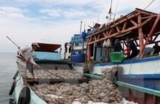 EC ghi nhận kết quả trong việc chống khai thác hải sản trái phép