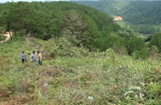 Đắk Nông: Phạt tù Nguyên Phó Chủ tịch UBND huyện Tuy Đức