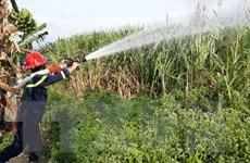 Kon Tum: Cảnh báo nguy cơ cháy đồng mía trong mùa khô